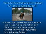 what is the purpose of this project for equine identification