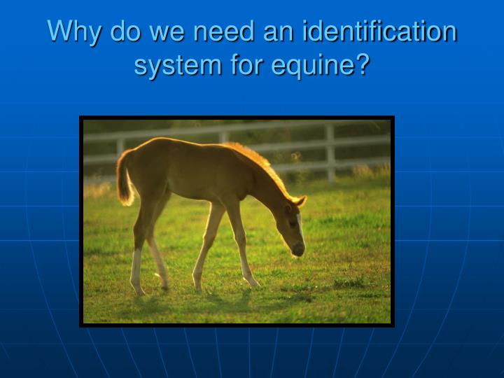 Why do we need an identification system for equine