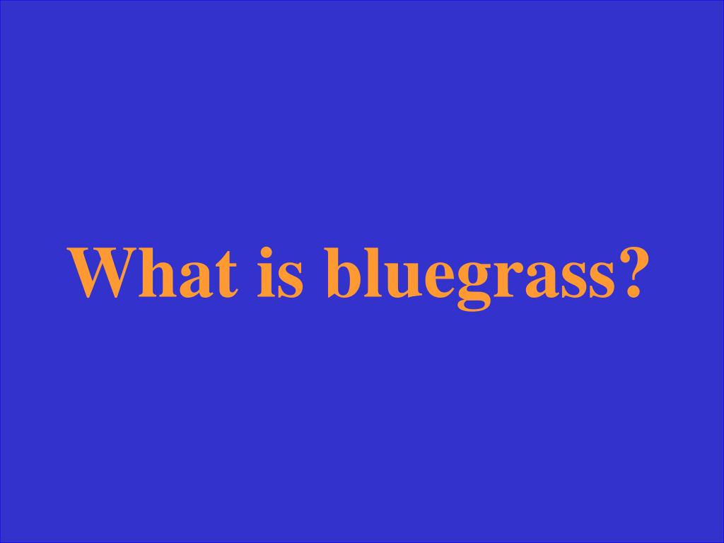 What is bluegrass?