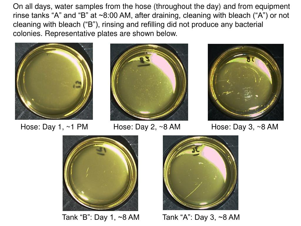 "On all days, water samples from the hose (throughout the day) and from equipment rinse tanks ""A"" and ""B"" at ~8:00 AM, after draining, cleaning with bleach (""A"") or not cleaning with bleach (""B""), rinsing and refilling did not produce any bacterial colonies. Representative plates are shown below."
