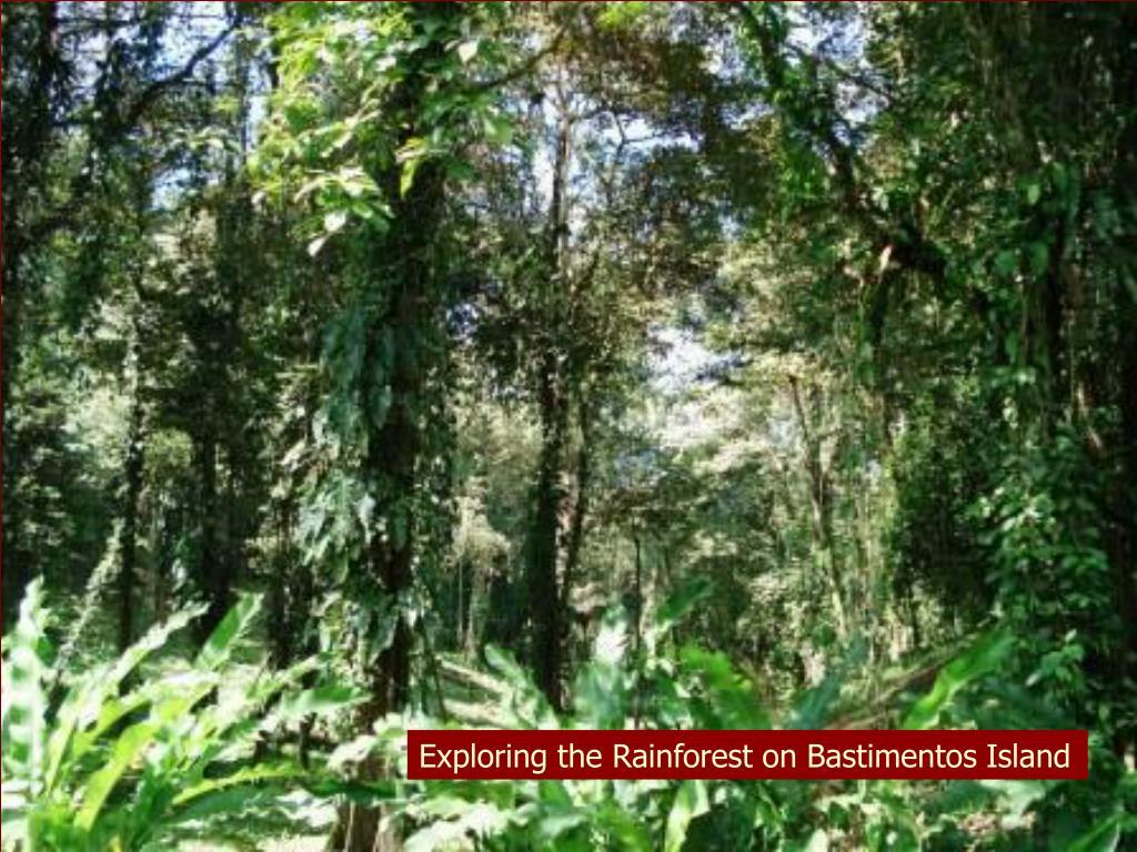Exploring the Rainforest on Bastimentos Island