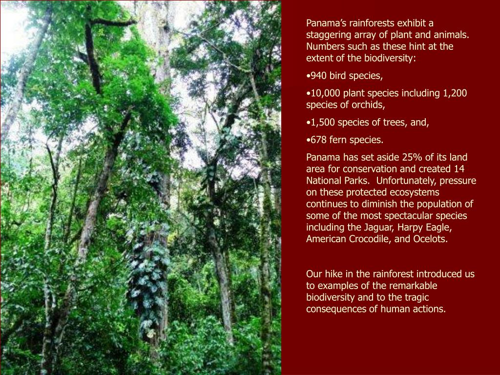 Panama's rainforests exhibit a staggering array of plant and animals.  Numbers such as these hint at the extent of the biodiversity:
