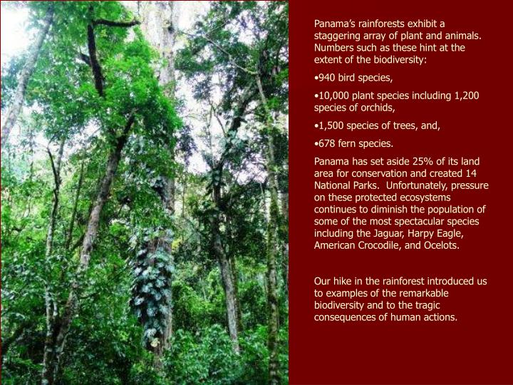 Panama's rainforests exhibit a staggering array of plant and animals.  Numbers such as these hint ...