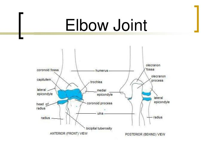 PPT - Elbow Joint PowerPoint Presentation - ID:645385