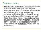 protozoa contd13