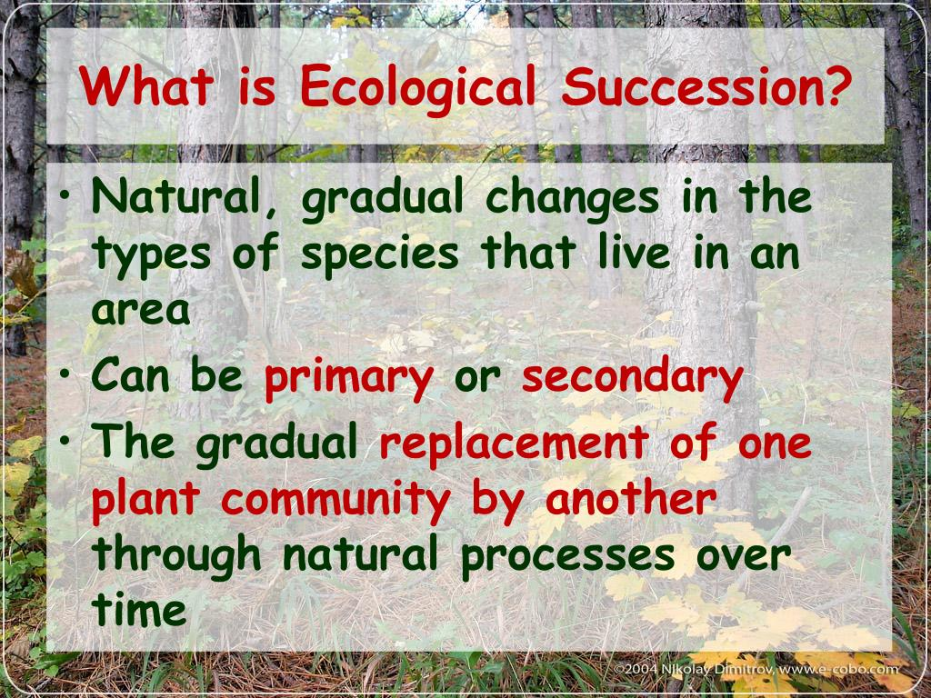 What is Ecological Succession?