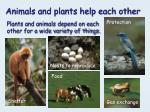 animals and plants help each other