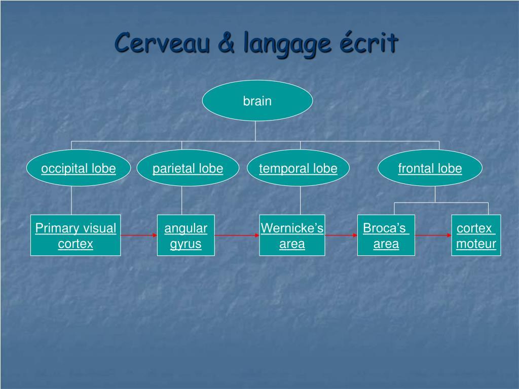Cerveau & langage écrit