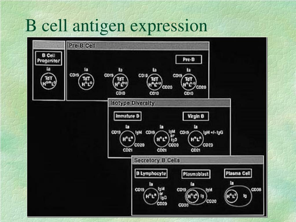 B cell antigen expression