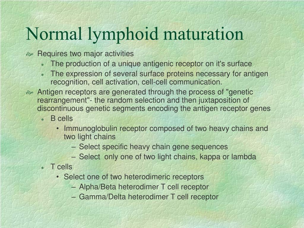 Normal lymphoid maturation
