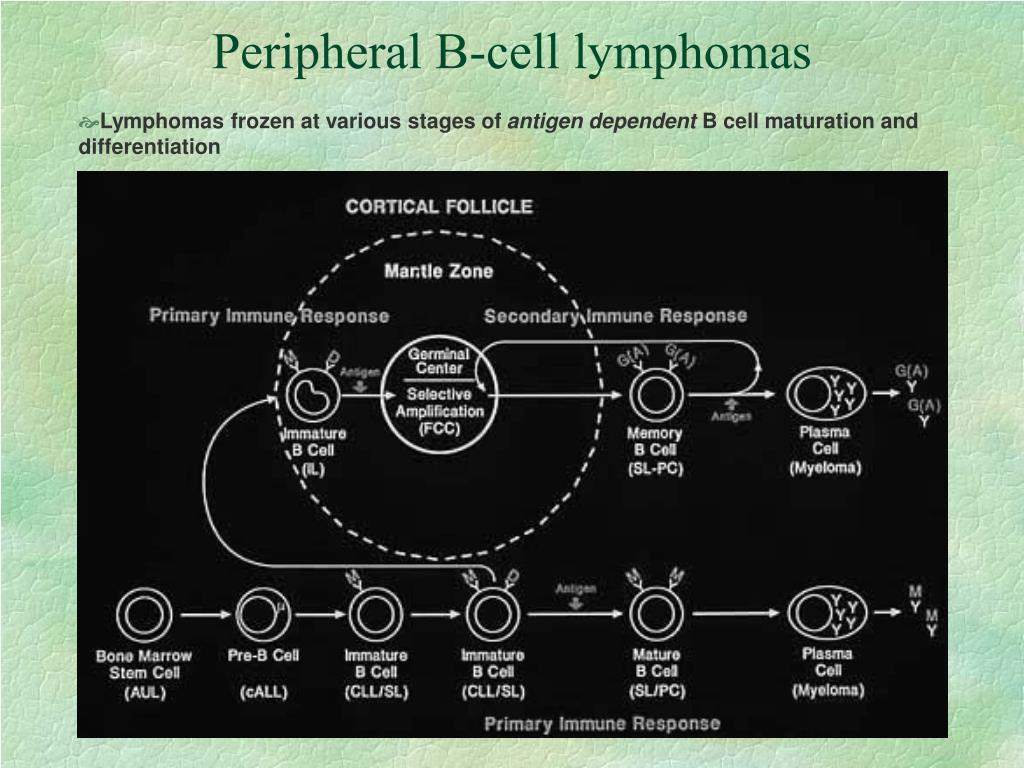 Peripheral B-cell lymphomas