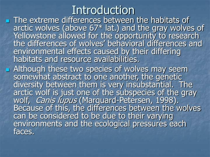 an introduction to the gray wolf or canis lupus Wild and captive wolf (canis lupus)  introduction due to an ever  programs for the mexican gray wolf (c lupus baileyii) and the red wolf (c.