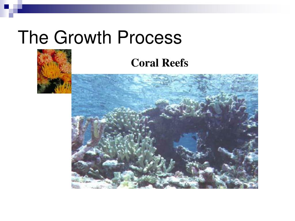 The Growth Process