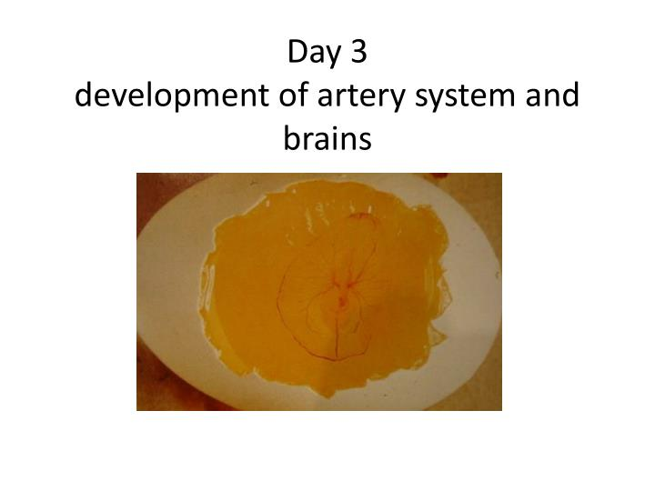 Day 3 development of artery system and brains