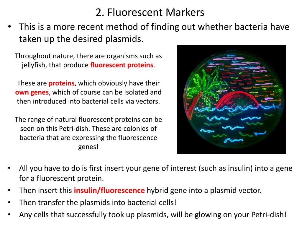 2. Fluorescent Markers