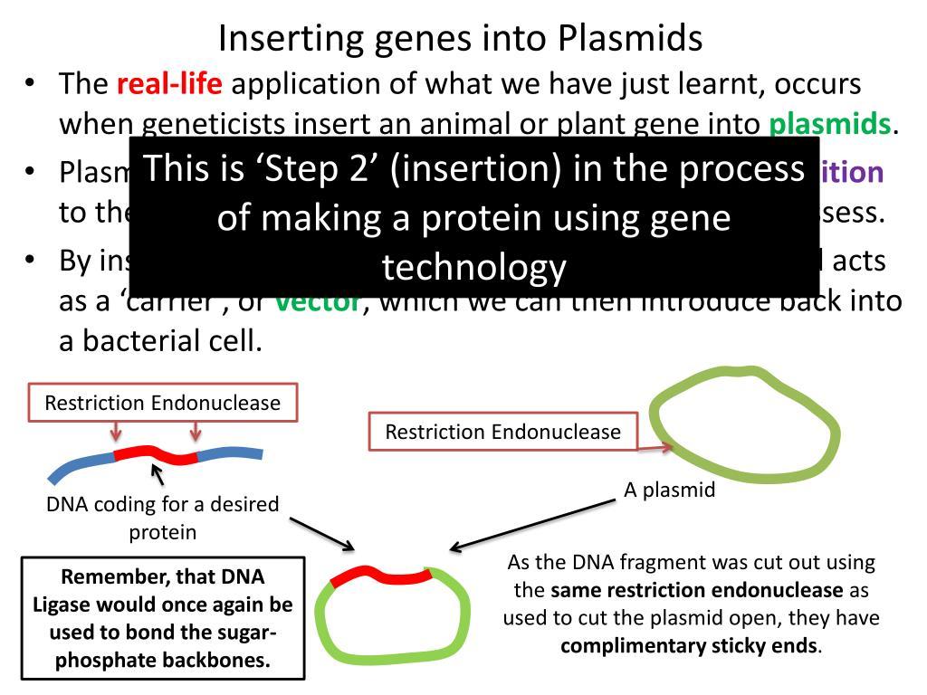 Inserting genes into Plasmids