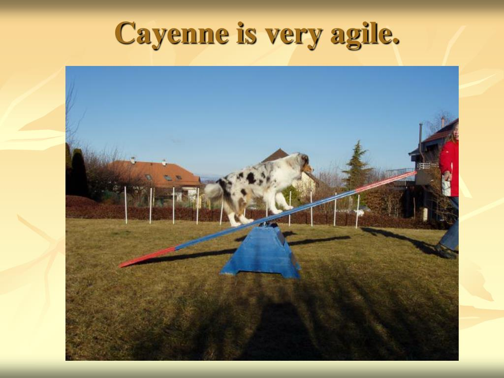 Cayenne is very agile.