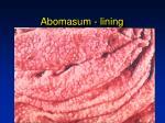 abomasum lining