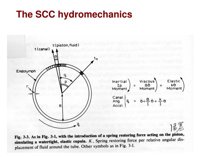 The SCC hydromechanics