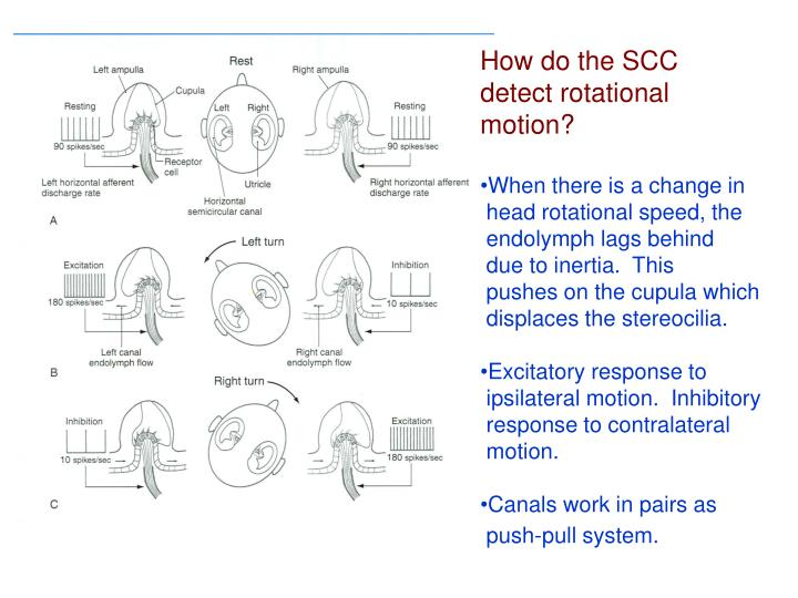 How do the SCC