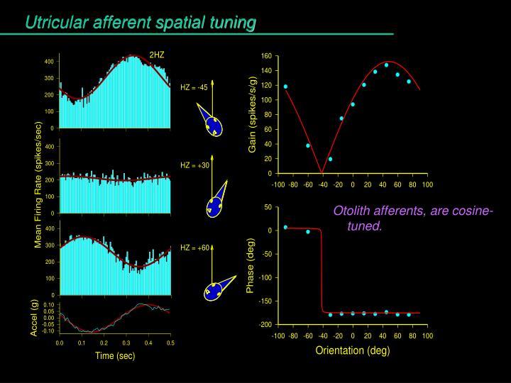 Utricular afferent spatial tuning