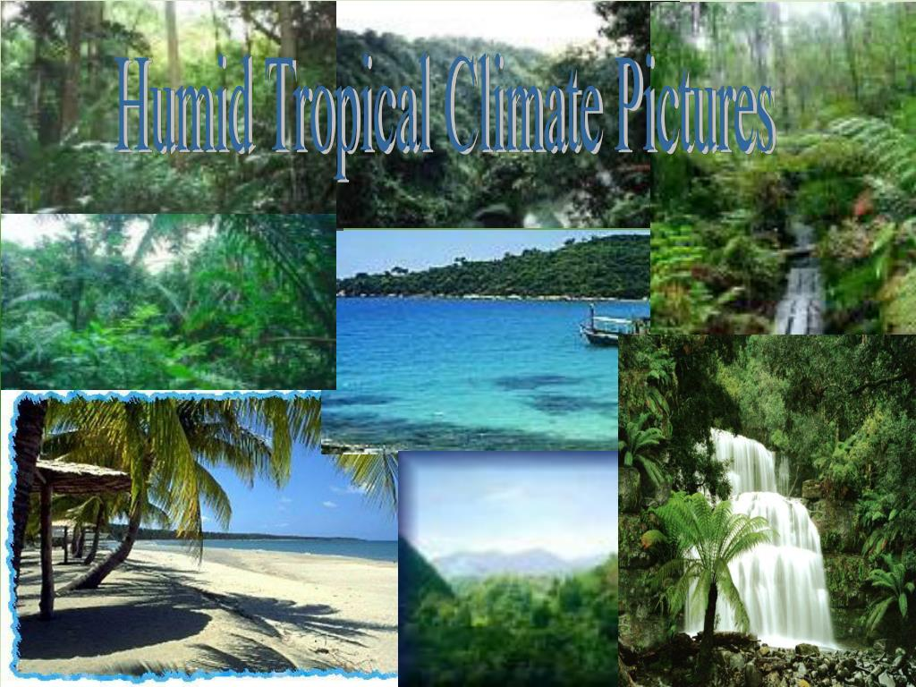 Humid Tropical Climate Pictures
