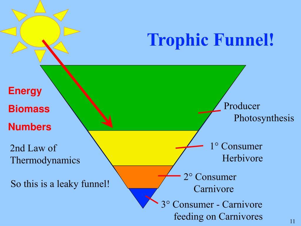 Trophic Funnel!