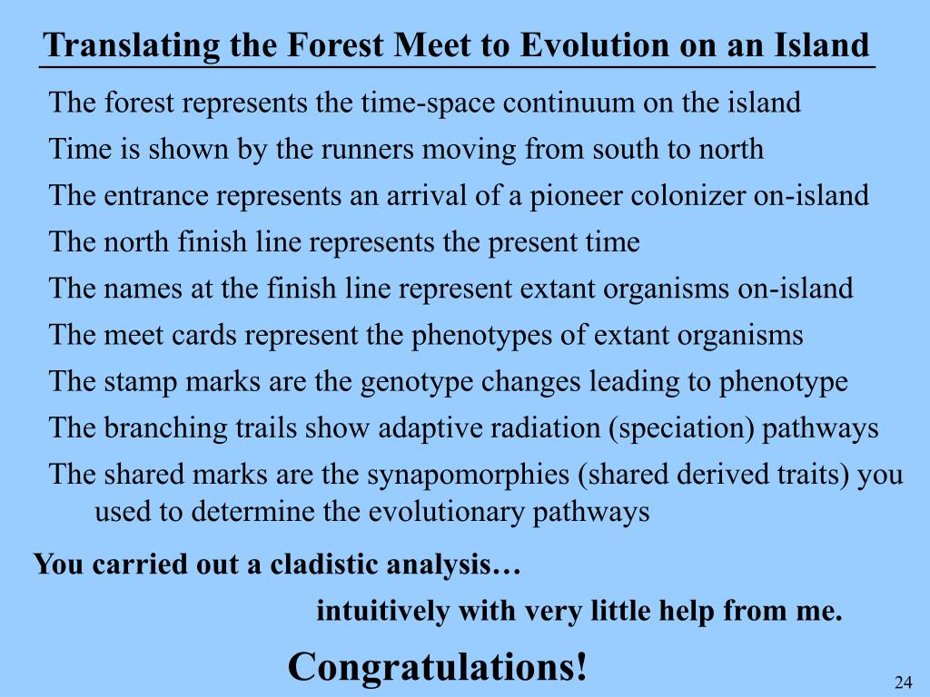 Translating the Forest Meet to Evolution on an Island