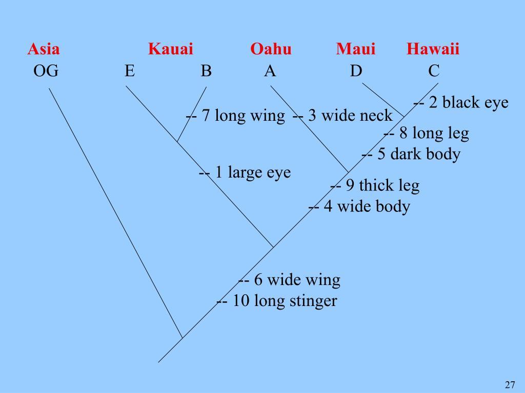 Asia                    Kauai             Oahu          Maui       Hawaii