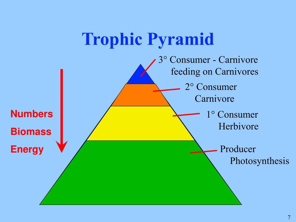 Trophic Pyramid