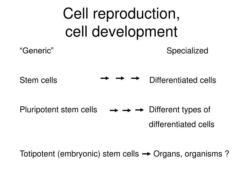 Cell reproduction,