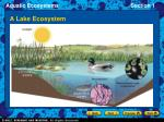 a lake ecosystem
