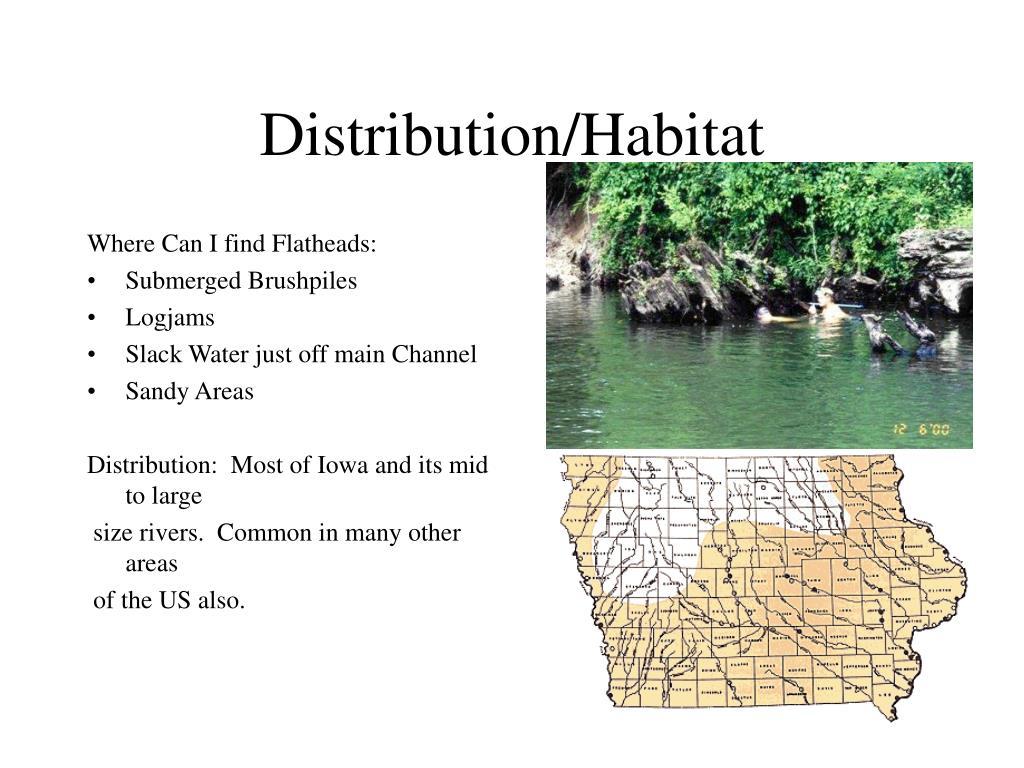 Distribution/Habitat