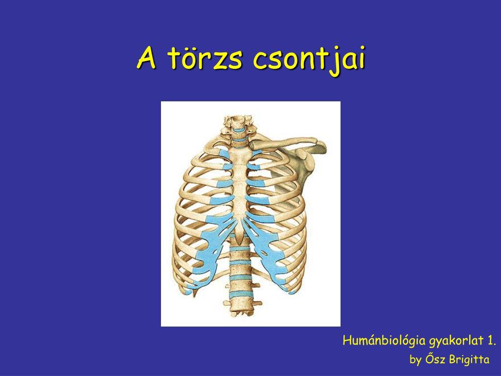 Mi a csontváz tengelye
