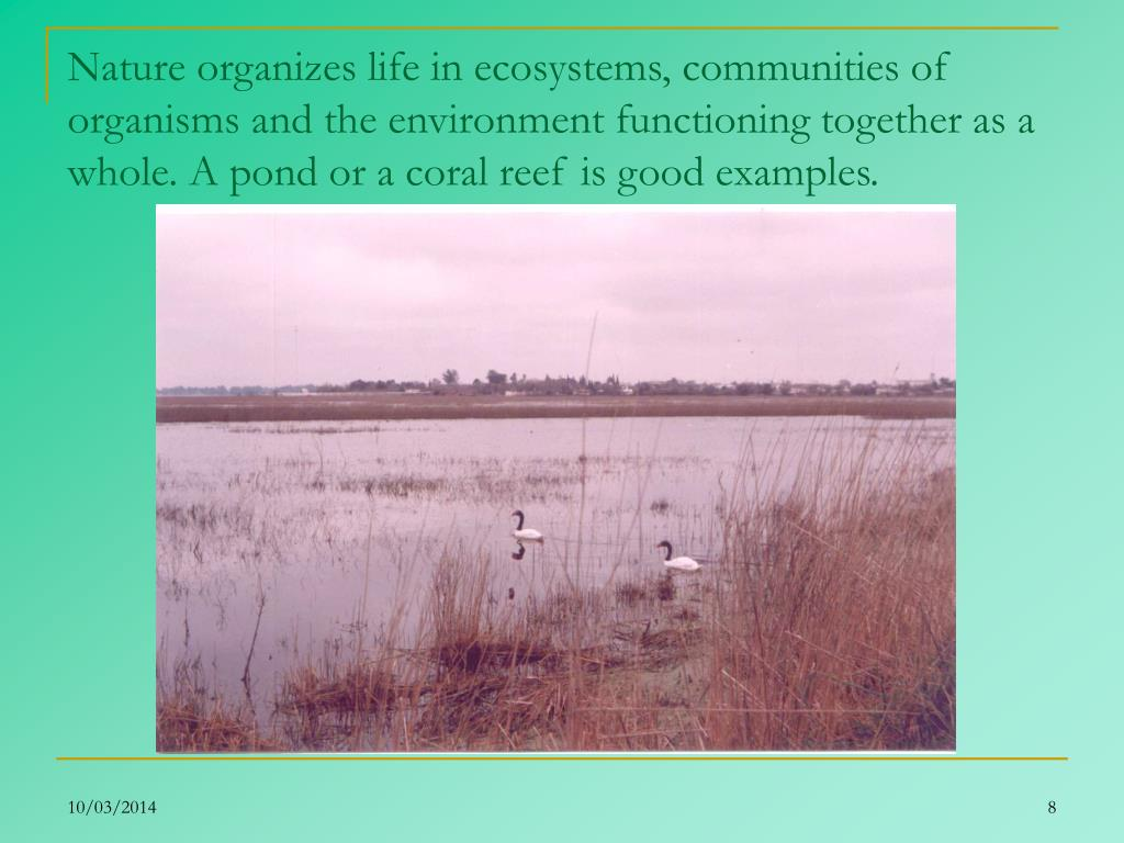 Nature organizes life in ecosystems, communities of organisms and the environment functioning together as a whole. A pond or a coral reef is good examples.