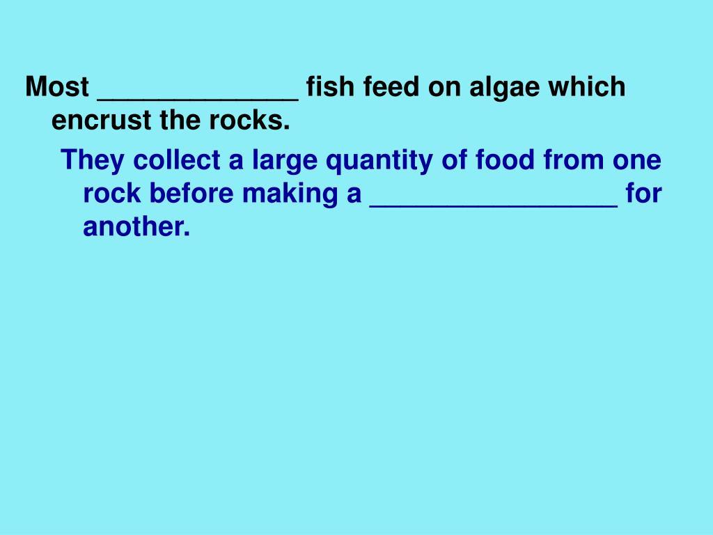 Most _____________ fish feed on algae which encrust the rocks.