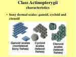 class actinopterygii characteristics