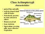 class actinopterygii characteristics6
