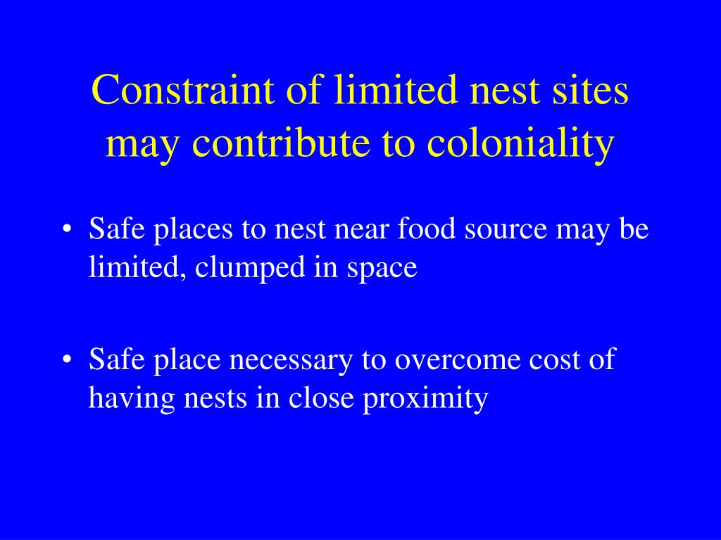 Constraint of limited nest sites may contribute to coloniality