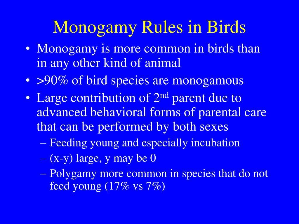 Monogamy Rules in Birds