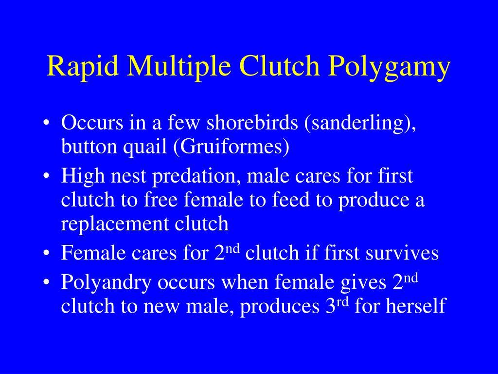 Rapid Multiple Clutch Polygamy