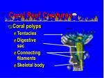 coral reef creatures