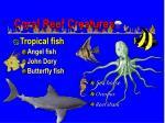 coral reef creatures60