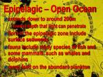 epipelagic open ocean