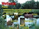 wetlands21