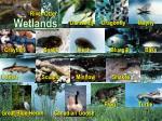 wetlands23