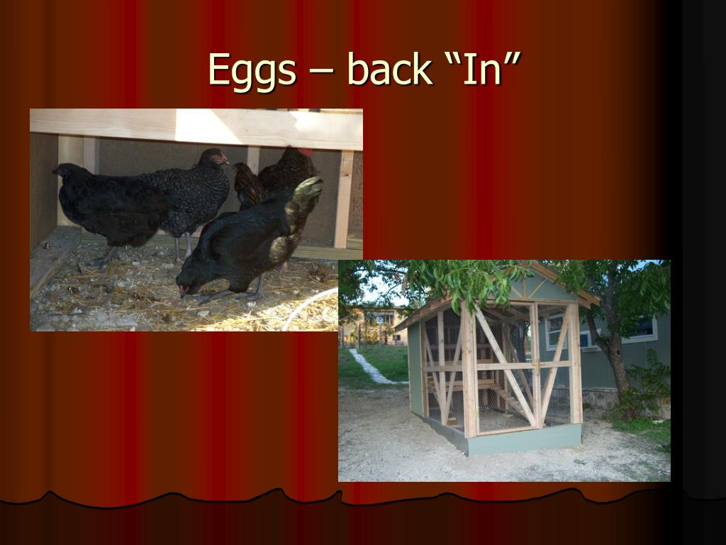 "Eggs – back ""In"""