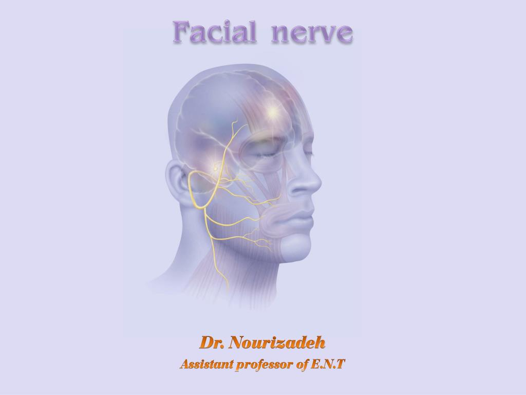 Ppt Facial Nerve Powerpoint Presentation Id651147