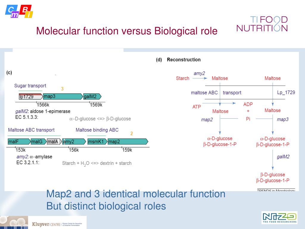 Molecular function versus Biological role