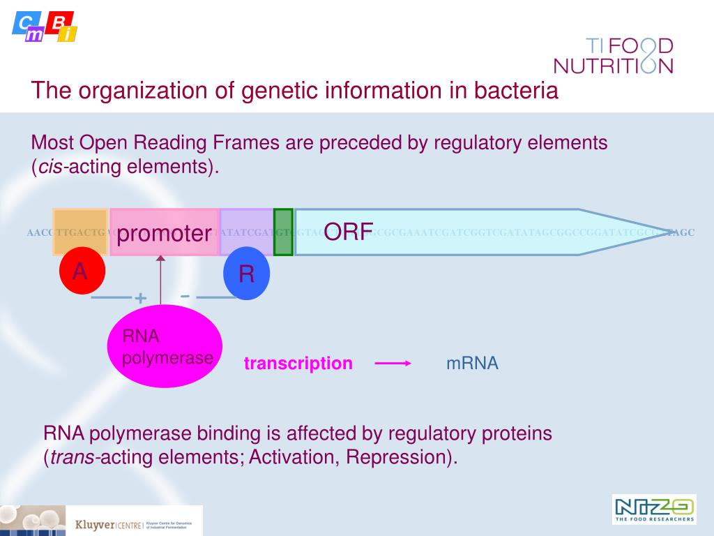 The organization of genetic information in bacteria
